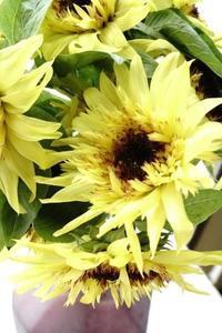 おいしそうな名前のひまわり(^^♪ - お花に囲まれて