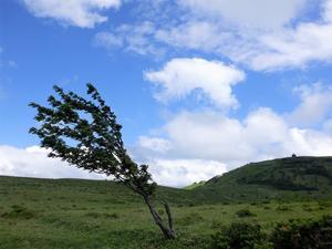 八ヶ岳 レイニーシーズンだけど高原ハイキング in 姫木平     Himekidaira in Yatsugatake-Ch?shin K?gen Quasi-National Park - やっぱり自然が好き