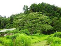 ハスの鑑賞週間 - 千葉県いすみ環境と文化のさとセンター