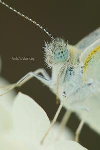 夏庭* - FUNKY'S BLUE SKY