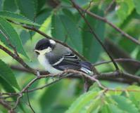 今日の鳥さん200707 - 万願寺通信