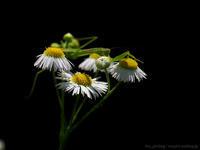 花の上に陣取る - M2_pictlog