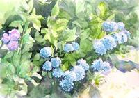 紫陽花寺-小坂観音院 - ryuuの手習い