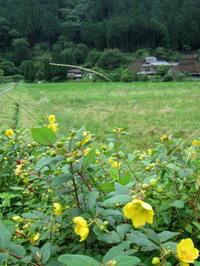 七夕月の雨降る里 - 京都ときどき沖縄ところにより気まぐれ