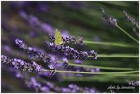 長居植物園にて昆虫達 - 今日のいちまい