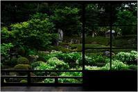 両足院の半夏生 - HIGEMASA's Moody Photo