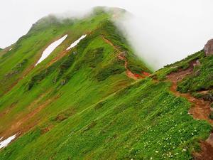 花の100名山富良野岳、2020.7.6ーその2ー - デジカメ持って野に山に