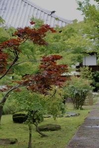 紫陽花と蓮の花の保寧寺さん - ゆきなそう  猫とガーデニングの日記