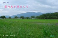 蓮の花が見たくて奈良藤原宮跡へ - 日本全国くるま旅