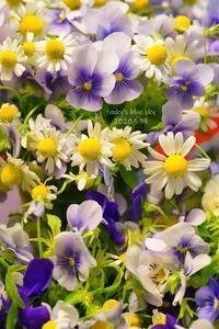 庭のブーケ*(5月19日)と、ワンコの不思議 - FUNKY'S BLUE SKY