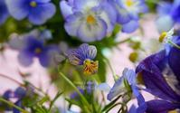 庭のブーケ*(5月23日・25日) - FUNKY'S BLUE SKY