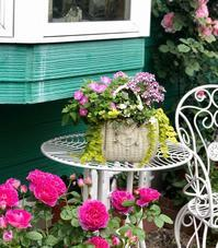 スピリットオブフリーダム、クロッシェの2番花♫と我が家のペチュニア&カリブラコア♡ - 薪割りマコのバラの庭