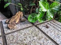 カエルの赤ちゃん - にゃんてワンダホー!