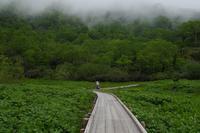自然園を歩く・サンカヨウ - フォトな日々