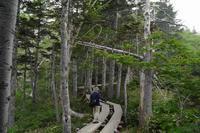 自然園を歩く・シラネアオイ - フォトな日々