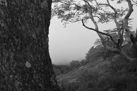 自然園を歩く・ゴゼンタチバナ - フォトな日々