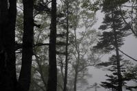 自然園を歩く・ショウジョウバカマ - フォトな日々