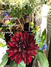 今日は定休日 -  Flower and cafe 花空間 ivory (アイボリー)