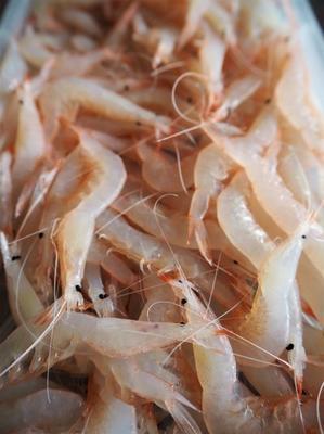 白えびのかき揚げとササミの天ぷら - sobu 2