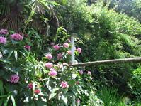大雨の後 - 南阿蘇 手づくり農園 菜の風
