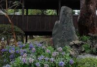 雨の中山法華経寺 - スポーツカメラマン国分智の散歩の途中で