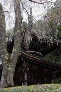 桜咲く~如意輪寺を歩く - katsuのヘタッピ風景