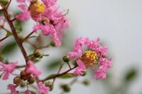 夏の花 - ecocoro日和