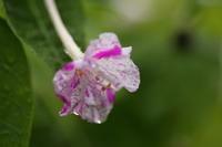 夜の花 - ecocoro日和