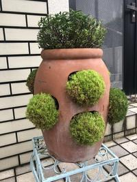 玄関前の鉢植剪定 - 笑わせるなよ泣けるじゃないか2