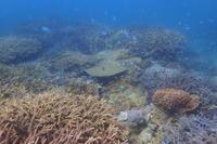 20.7.9スズメ追いの側で - 沖縄本島 島んちゅガイドの『ダイビング日誌』