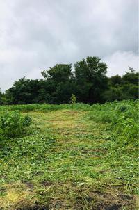 ありがたや❗️ - 富士のふもとの農業日誌