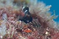 カップル - Diving Life ~Aita pe'a pe'a~
