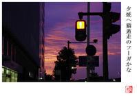 夕焼へ猫遁走のフーガかな - 風と光の散歩道、有希編2a