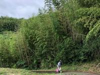 細い竹を山から切り取ったが・・・ - 島暮らしのケセラセラ