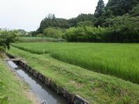 久しぶりに短く照った太陽の光。湿度は90%。 - 千葉県いすみ環境と文化のさとセンター