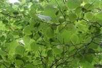 散歩道の木の実たち - そらいろのパレット