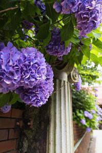 存在感のある花 - 休日PHOTOブログ