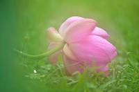 無垢 - お花びより