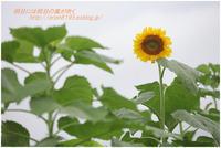 夏の象徴 - 明日には明日の風が吹く