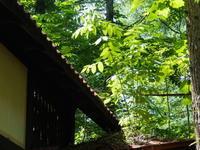 """ど根性""""オニグルミ""""・・屋根の上で成長しています。 - 十勝・中札内村「森の中の日記」~café&宿カンタベリー~"""