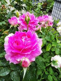 寄せ植え振り返り - 小庭の園芸日記