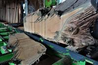 神代欅丸太製材 - SOLiD「無垢材セレクトカタログ」/ 材木店・製材所 新発田屋(シバタヤ)