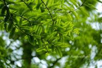 六甲森林植物園のつづき ** - ふわふわ日和