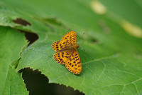 北海道遠征(1) - 蝶と蜻蛉の撮影日記