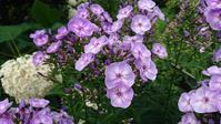 今日の庭と賭けの中身 - 今から・花