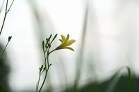 旬の花・・! - さすらい写人
