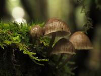 苔の森へ - 思い出を残して歩け。