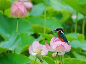 今日の撮って出し!  ハスカワ  KGY - 野鳥観察記録