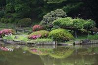 東京日本画教室covid-19関連 - 『一日一畫』 日本画家池上紘子
