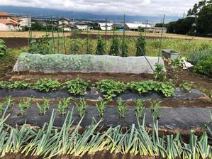 畑もジメジメ - my small garden~sugar plum~